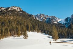 在Tatra山的冬天 库存照片