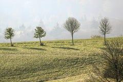 在Taunus山的春天树 免版税库存图片