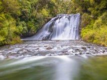 在Te Urewera一片豪华的雨林的瀑布  免版税库存照片