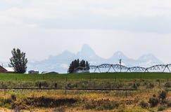 在Teton山附近的浇灌的领域 库存照片
