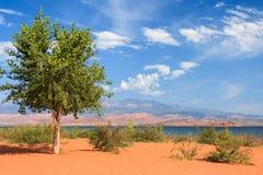 在Th沙滩的偏僻的树在沙子凹陷国家公园在犹他 库存照片