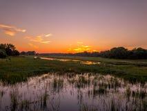 在Thamalakane河的日出 库存图片