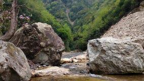 在The Creek边缘  库存图片