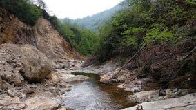 在The Creek边缘  图库摄影