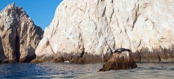 """在""""the Pointâ€土地Los卡约埃尔考斯End† 或""""Pinnacle的加利福尼亚海狮在Cabo圣卢卡斯在巴哈墨西哥 图库摄影"""
