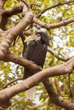 在thee的犀鸟鸟在狂放 库存图片