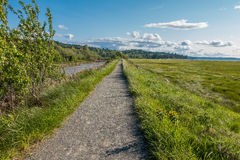 在Theler沼泽地的道路 免版税库存图片