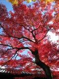 在Tofukuji的红色叶子季节在京都 免版税库存照片