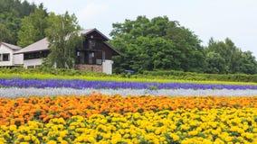 在Tomita的各种各样的五颜六色的花田种田, Furano,北海道 免版税库存图片