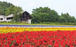 在Tomita的各种各样的五颜六色的花田种田, Furano,北海道 免版税库存照片