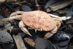 在Tonsina点的特写镜头螃蟹 库存图片