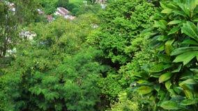在Tra Su森林湄公河三角洲的,越南的绿色树 股票视频
