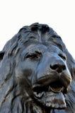 在trafalgar正方形的狮子 免版税库存图片