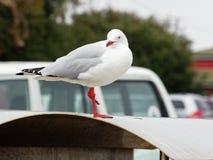 在trashcan的海鸥由海滩 免版税库存图片