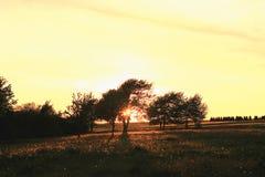 在Treegroup之间的晚上太阳 免版税库存图片