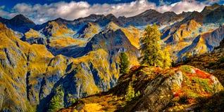 在treeline瑞士人阿尔卑斯上的秋天 免版税库存图片