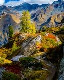 在treeline瑞士人阿尔卑斯上的秋天 免版税图库摄影