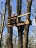 在Treestand的鹿猎人 库存照片