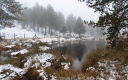 在Troodos山的田园诗冬天森林风景,塞浦路斯 免版税库存图片