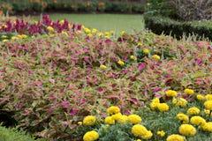 在Tugu Negara纪念碑的花在吉隆坡,马来西亚 免版税库存图片