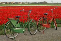 在tulipfield的自行车在荷兰 库存图片