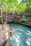 在Tulum,墨西哥附近的Cenote 免版税库存图片