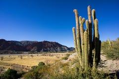 在Tupiza附近的谷,玻利维亚 库存图片