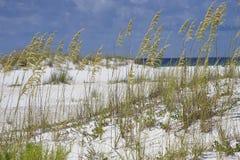 在Turqouise蓝色海滩的海燕麦在佛罗里达 免版税库存图片