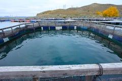 在Twizel,南岛,新西兰附近的三文鱼农场 免版税库存照片