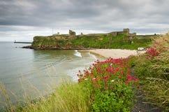 在Tynemouth海滩的野花 免版税库存图片