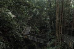 在Ubud ` s猴子森林圣所的桥梁与与日志根和分支,巴厘岛,印度尼西亚的巨大的老树 库存图片