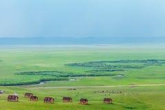 在Ulagai干草原的原木小屋 库存照片