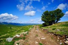 在Ulagan高原附近的阿尔泰山 免版税图库摄影