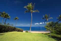 在Ulua海滩,南毛伊,夏威夷,美国前面的棕榈树 库存照片