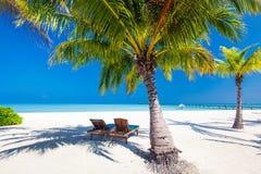 在umrellas下的轻便折叠躺椅和在海滩的棕榈树 库存图片