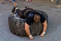 在Uzhgorod供给比赛`喀尔巴阡山脉的熊2016年`动力 免版税库存图片