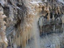 在Valaste瀑布爱沙尼亚附近的冻树 免版税库存照片