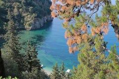 在Valtos海滩附近的森林在Parga 库存照片