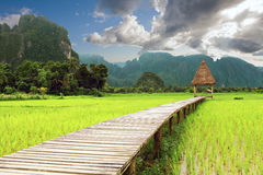 在Vang Vieng, Loas的木眺望台和米领域 免版税库存照片
