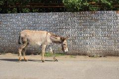 在Vank村庄的街道的驴 库存图片