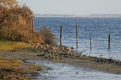 在Veerse米娅的边缘的秋天颜色在Noord Beveland 免版税库存照片