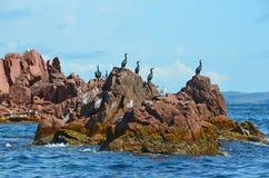 在Verkhovsky岩石的黑鸬鹚在彼得大帝湾,滨海边疆区,俄罗斯的西部 免版税库存图片