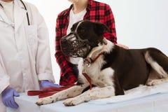 在veterenarian的逗人喜爱的狗 免版税库存图片