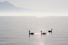 在vevey附近的日内瓦湖 免版税库存照片