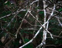 在vilage的Naturale树 库存照片
