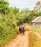 在Vinales谷的一个典型的看法在古巴 库存图片