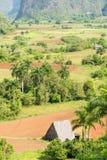 在Vinales谷的农业在古巴 免版税库存照片