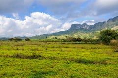 在Vinales谷,古巴的绿色领域 图库摄影