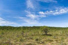 在Viru沼泽区域的风景cloudscape 免版税库存照片