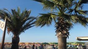 在Viserbella的海滩创立的大棕榈树 免版税库存图片